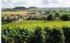 Vignoble à Massigny, nord de Chatillon sur Seine